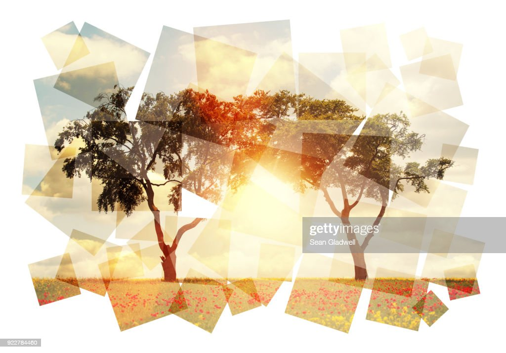 Abstract sun and trees : Stock Photo