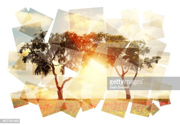 abstract sun and trees - mosaik stock-fotos und bilder