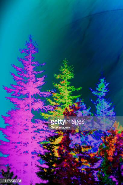 abstract tree scene - psychedelic color art product - saturated color stock pictures, royalty-free photos & images