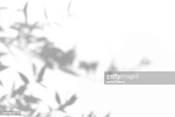 abstract ultimate gray shadows from tropical plant leaves of bamboo on white background. black and white shadow isolated for your design and art. trendy monochrome color of the year 2021. flat lay style with copy space - 陰 ストックフォトと画像