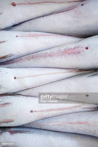 abstract view of dead fish - dead body - fotografias e filmes do acervo
