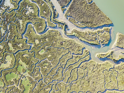 abstract view of marshland 1087139756