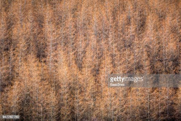 abstract - withered  trees in sunshine - egersund stock photos and pictures