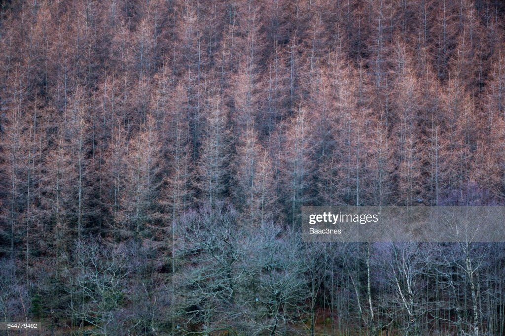 Abstract - Withered  trees : Stock Photo