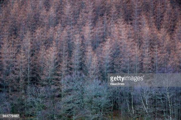 abstract - withered  trees - egersund stock photos and pictures