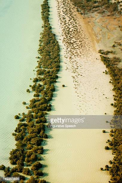 abu dhabi - mangroves at shallows - mangrove tree stock pictures, royalty-free photos & images