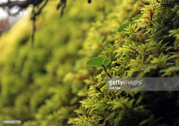 abundance of moss on the forest floor - forest floor stock photos and pictures
