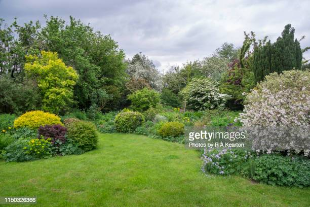 abundant growth in a cottage garden in may - lawn stock pictures, royalty-free photos & images