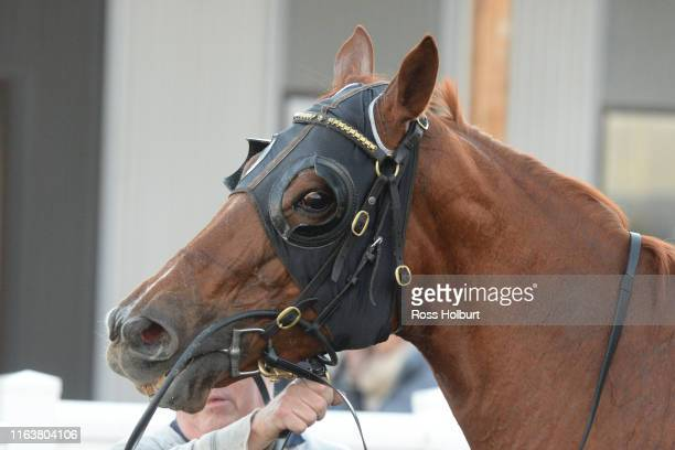 Abyssinian after winning the Laurie Fenton Memorial Get Out Stakes BM58 Handicap at Racingcom Park Synthetic Racecourse on August 25 2019 in Pakenham...