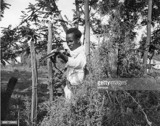 Abyssinian War September 1935 Abyssinian sniper seen here on the Ogadan Front