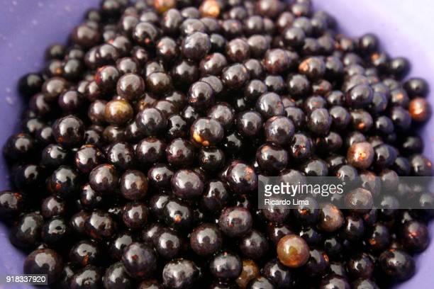 aca berries (euterpe oleracea) - acai stock pictures, royalty-free photos & images