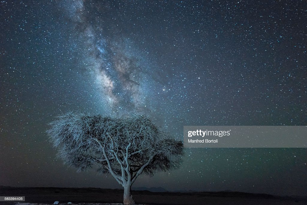 Acacia tree and Milky Way at night in the desert : Stock Photo
