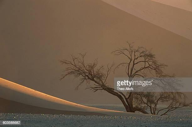 Acacia Tree and Sand Dunes