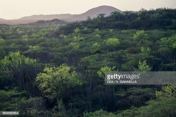 Acacias and cacti, semi-arid landscape, Jaragua National Park , Dominican Republic.