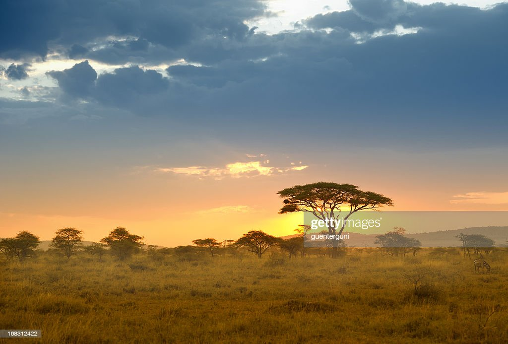 60 Top Serengeti National Park Pictures, Photos, & Images