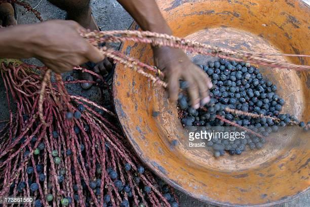 acai de recolección - actividad de agricultura fotografías e imágenes de stock