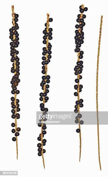 Acai berries on stems