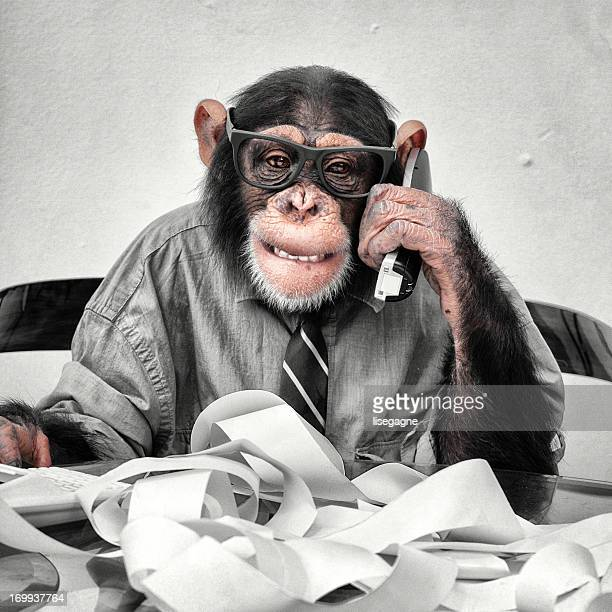 accountant goofy chimp - monkeys stock pictures, royalty-free photos & images