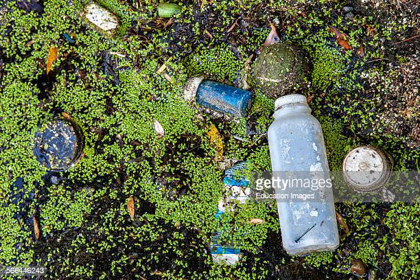 Accumulated trash in the Los Angeles River along the Sepulveda Basin Recreation Area, one of the remaining soft-bottomed portions of the river. Los...