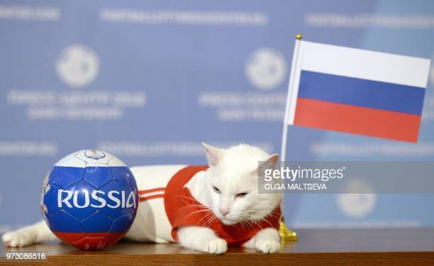 Achille the cat one of the State Hermitage Museum mice hunters poses for a photo with Russia national flag during a ceremony in Saint Petersburg on...