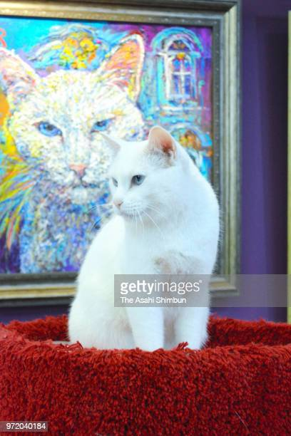Achilles the Cat is seen at Hermitage Museum on June 5 2018 in St Petersburg Russia The deaf cat is predicting the result of the FIFA World Cup...