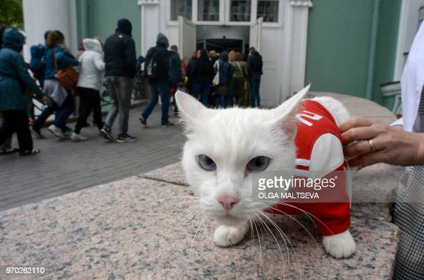 Achilles the cat one of the State Hermitage Museum mice hunters is pictured outside the museum in Saint Petersburg on June 7 2018 A deaf white cat...