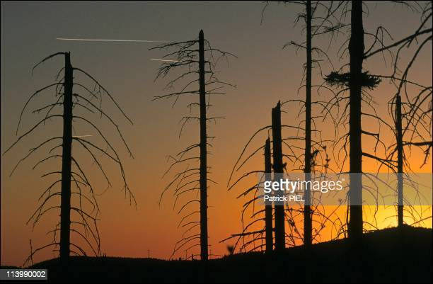 """acid rain the southern company a A study of oak and pine trees affected by acid rain in both rural and urban areas  of  was chosen to represent a southern area that has high levels of acid rain   """"the catalyst and technology company,"""" specializes in wet gas sulfuric acid ."""