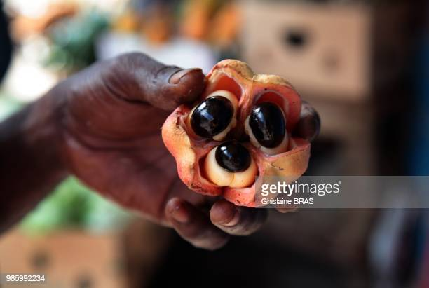 Ackee or Akee is the national fruit in Jamaica on December 27 2011 in Port Antonio Jamaica