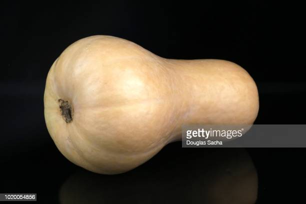 Acorn Butternut Squash on a black background (cucurbita pepo var turbinata)