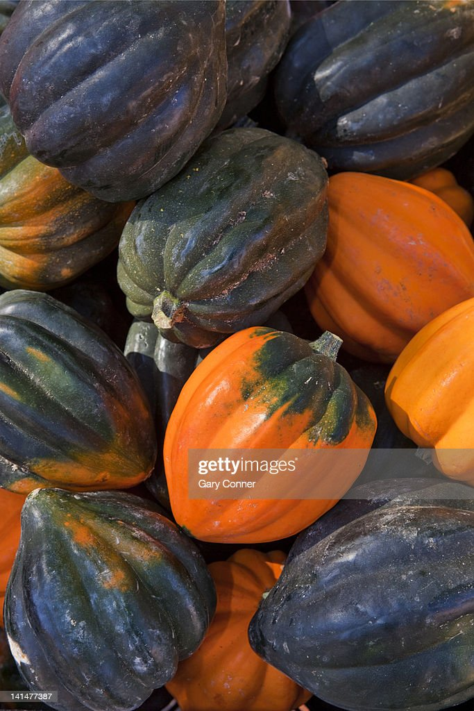 Acorn squash at farmers market in Colorado : Stock Photo