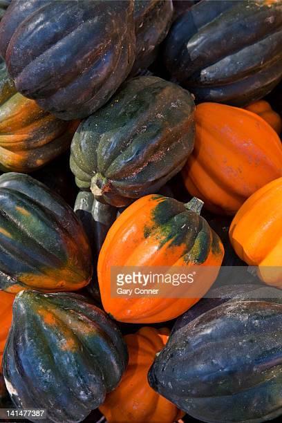 Acorn squash at farmers market in Colorado