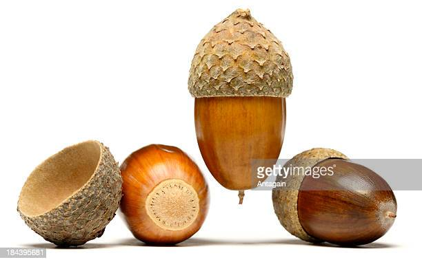 acorn stock photos and pictures getty images