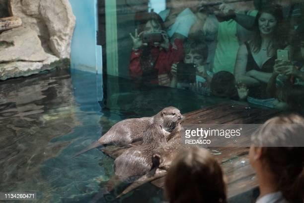 Acquarium of Cattolica Otters Emilia Romagna Italy Europe