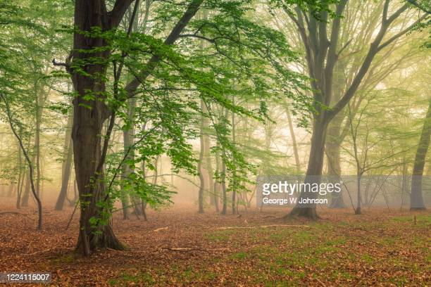 100 acre wood - george wood stock pictures, royalty-free photos & images
