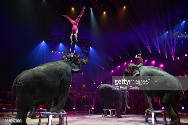Acrobats an Elephants perform during the Gala Ceremony of the 43rd International Circus Festival of MonteCarlo on January 22 2019 in Monaco Monaco