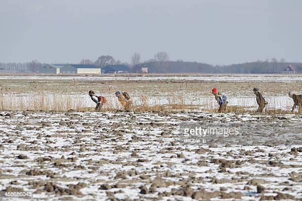 across dutch fields - friesland noord holland stockfoto's en -beelden