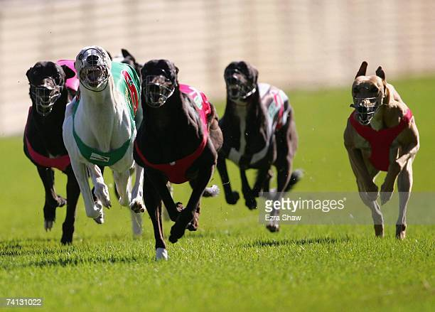 Action of the fifth race at the Appin Way Race meeting on May 12 2007 in Sydney Australia
