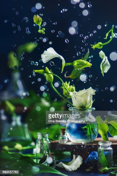 Action still life with white flowers in a glass vase and water drops