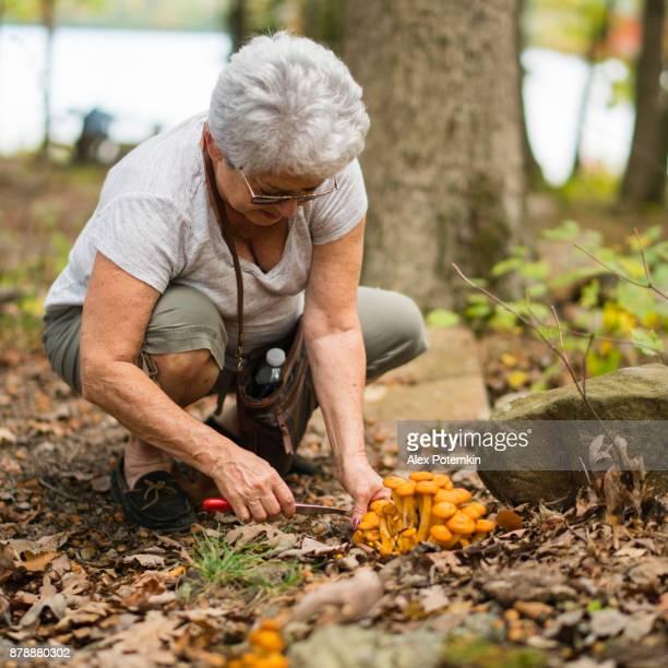 Actieve 70-jaar-oud senior vrouw een paddestoelen plukken in het bos