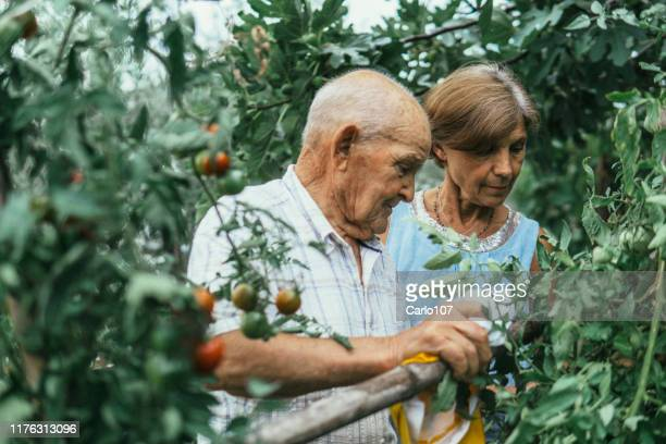 active couple gardening - aging process stock pictures, royalty-free photos & images