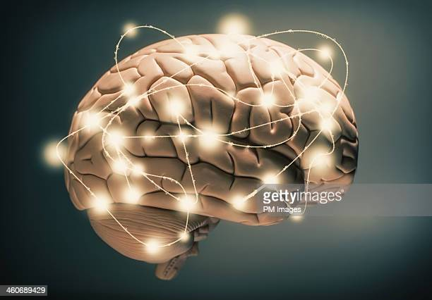 active human brain - human brain stock pictures, royalty-free photos & images