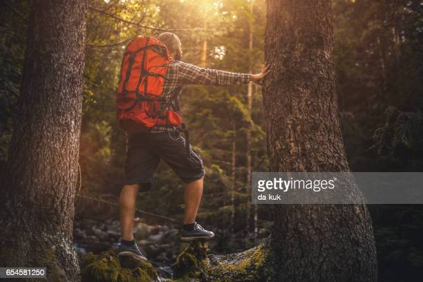 活発な男性トレイルを夕暮れ森で一人でハイキング