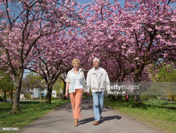 active senior couple walking under blooming cherry trees - may stock pictures, royalty-free photos & images