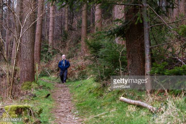 active senior man on a forest path in rural dumfries and galloway, south west scotland. - johnfscott stock pictures, royalty-free photos & images
