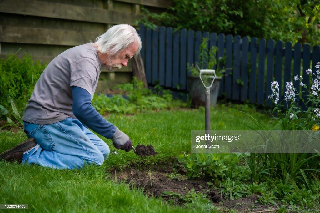 Active senior man using a garden hand fork : Stock Photo