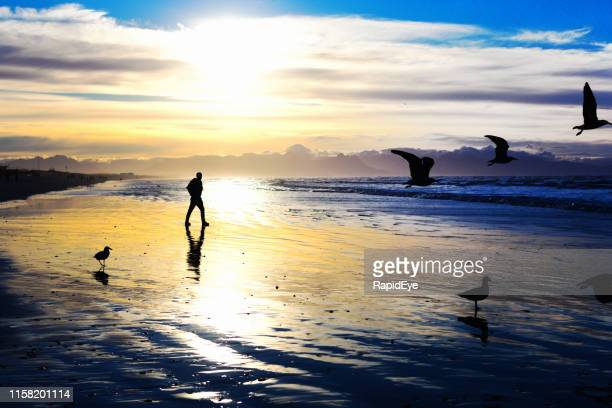 active senior man walking on a beautiful beach as sea birds take flight - seagull stock pictures, royalty-free photos & images