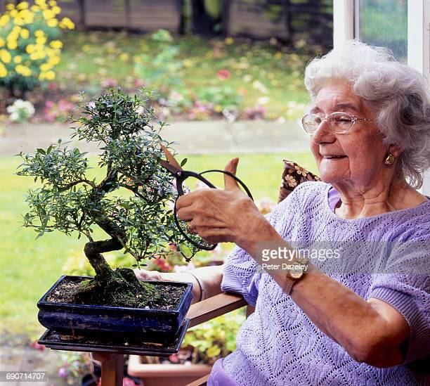 active senior trimming bonsai tree - one senior woman only stock pictures, royalty-free photos & images
