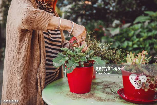 active senior woman enjoying planting - pot plant stock pictures, royalty-free photos & images