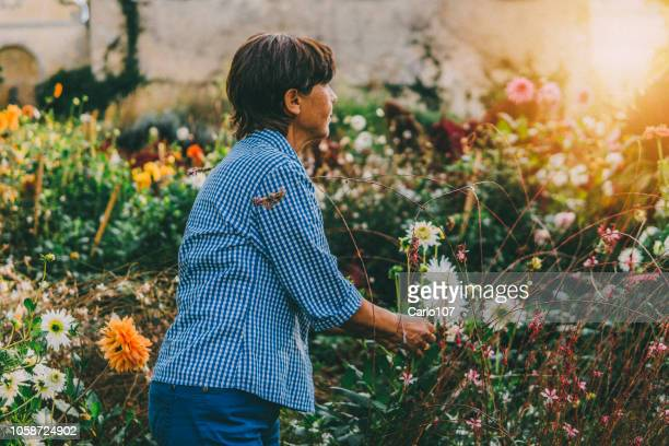 active senior woman gardening - independence stock pictures, royalty-free photos & images