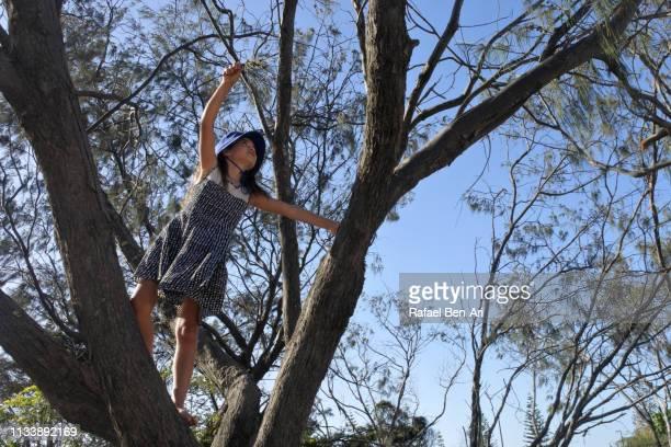 active young girl climbing on a tree - rafael ben ari 個照片及圖片檔